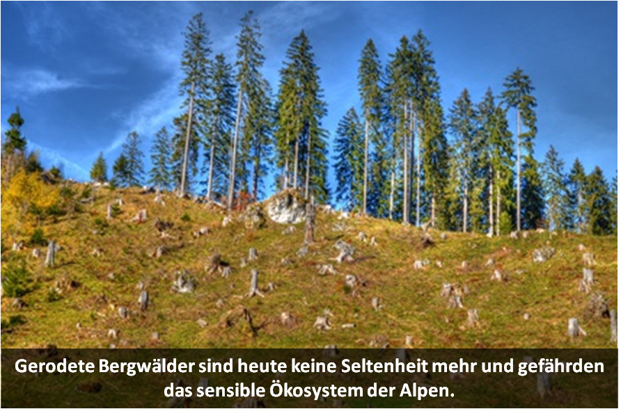 Gerodete Bergwälder